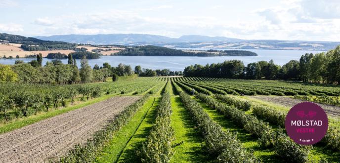 Mølstad gård - Norges største solbærprodusent