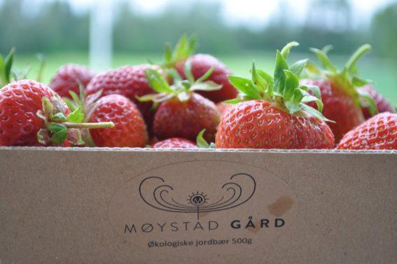 Møystad gård - økologisk drift